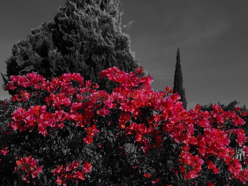 Λουλούδια της πυρκαγιάς στοκ φωτογραφίες