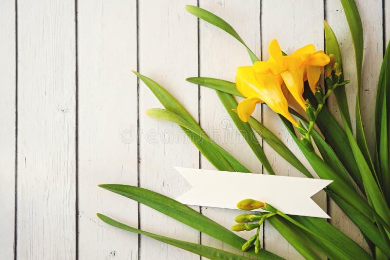 Λουλούδια της Daisy στο άσπρο υπόβαθρο εκλεκτικό DOF στοκ εικόνες