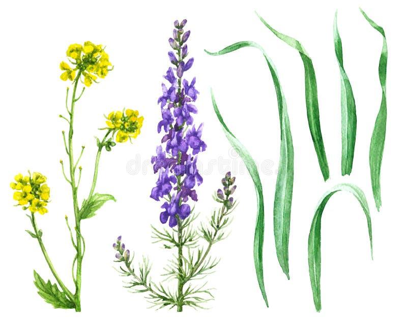 Λουλούδια τομέων και φύλλα χλόης ελεύθερη απεικόνιση δικαιώματος