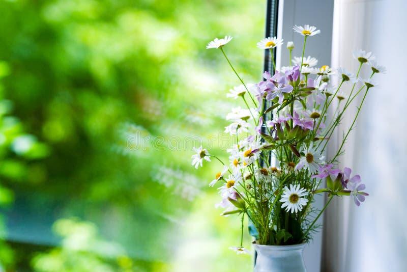 Λουλούδια τομέων της μαργαρίτας φαρμακοποιών ` s κοντά στο παράθυρο στοκ εικόνες