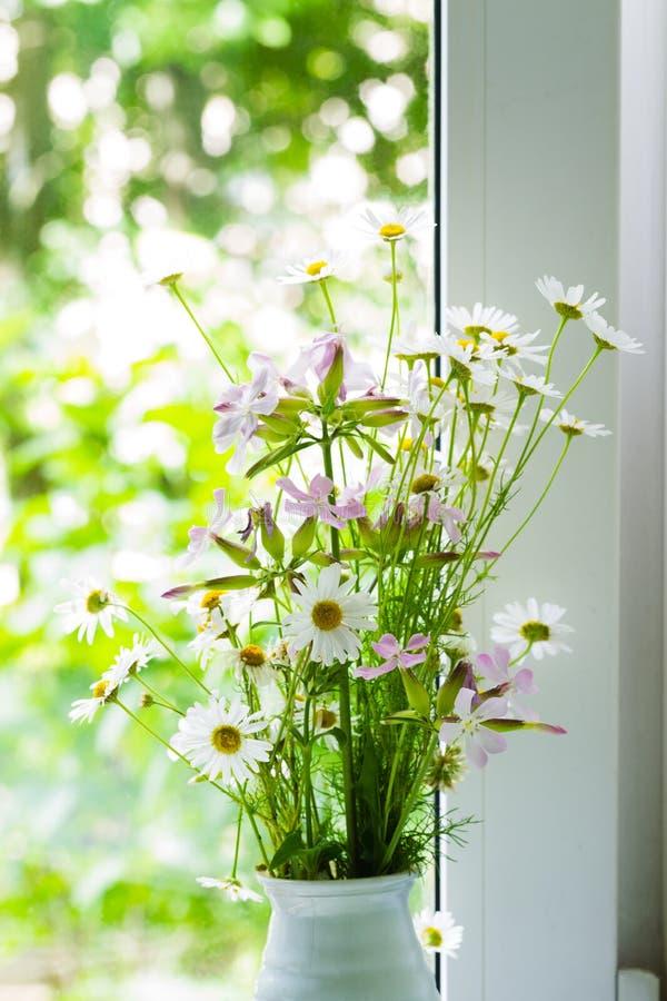 Λουλούδια τομέων της μαργαρίτας φαρμακοποιών ` s κοντά στο παράθυρο στοκ εικόνα με δικαίωμα ελεύθερης χρήσης