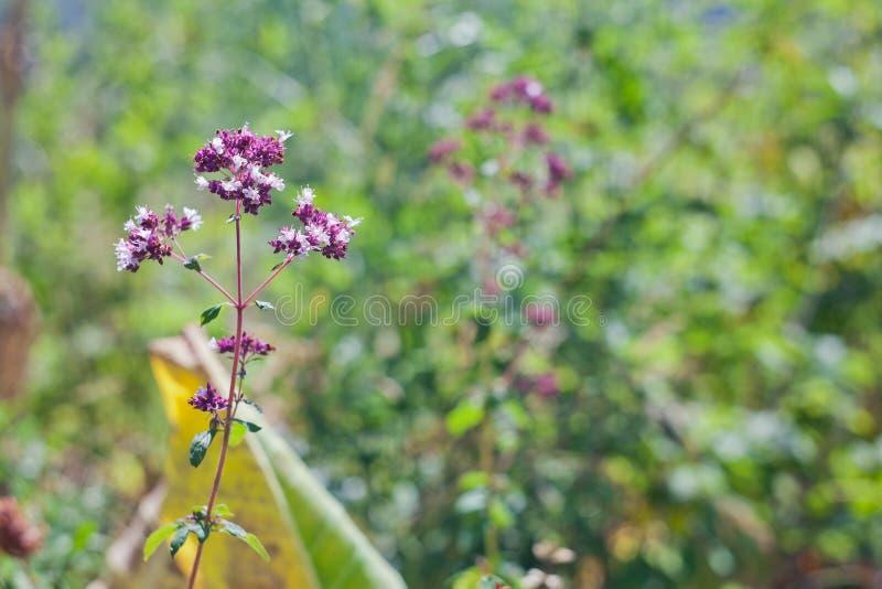 Λουλούδια τομέων στοκ εικόνες