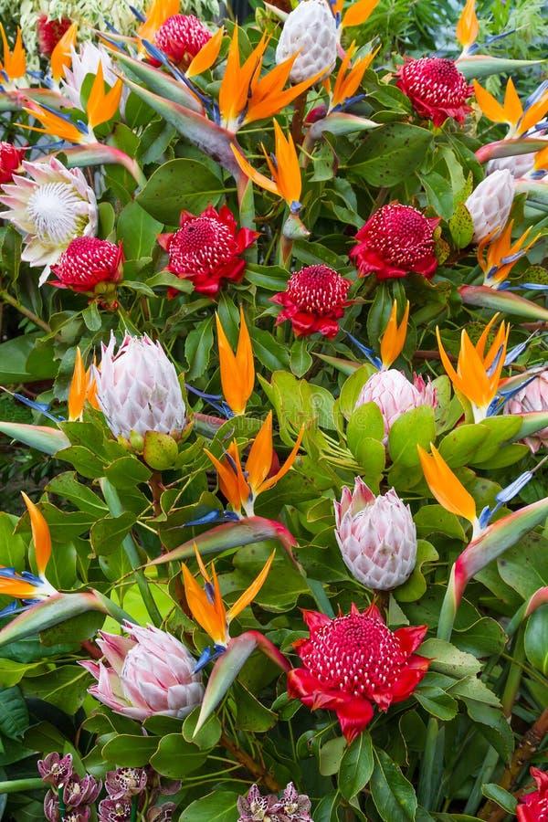 Λουλούδια του νησιού της Μαδέρας, Φουνκάλ, Πορτογαλία στοκ εικόνες