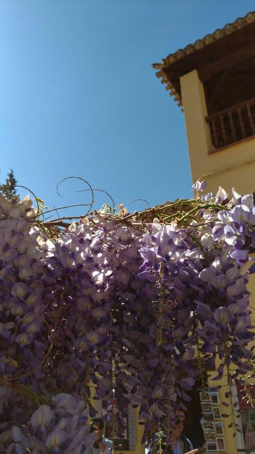 Λουλούδια του πεζουλιού στοκ εικόνα με δικαίωμα ελεύθερης χρήσης