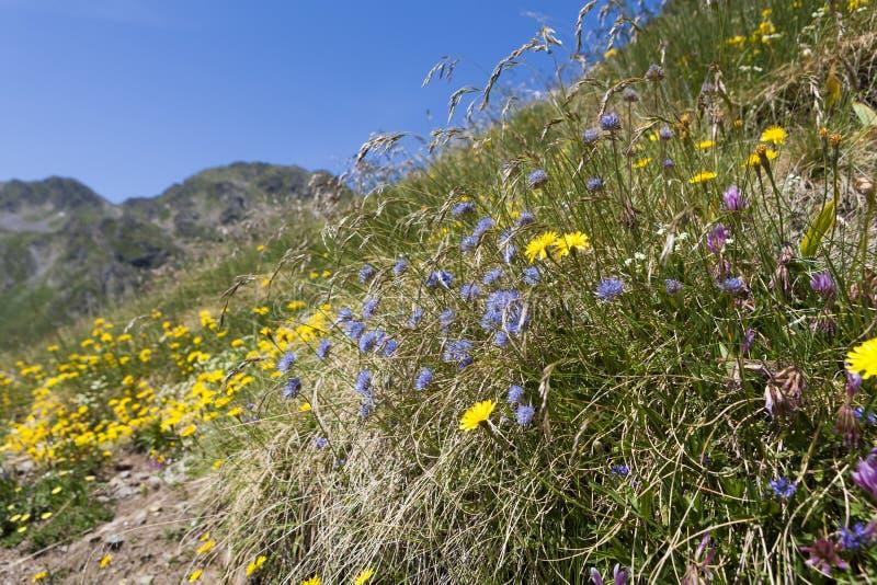 Λουλούδια των Πυρηναίων στοκ φωτογραφίες με δικαίωμα ελεύθερης χρήσης