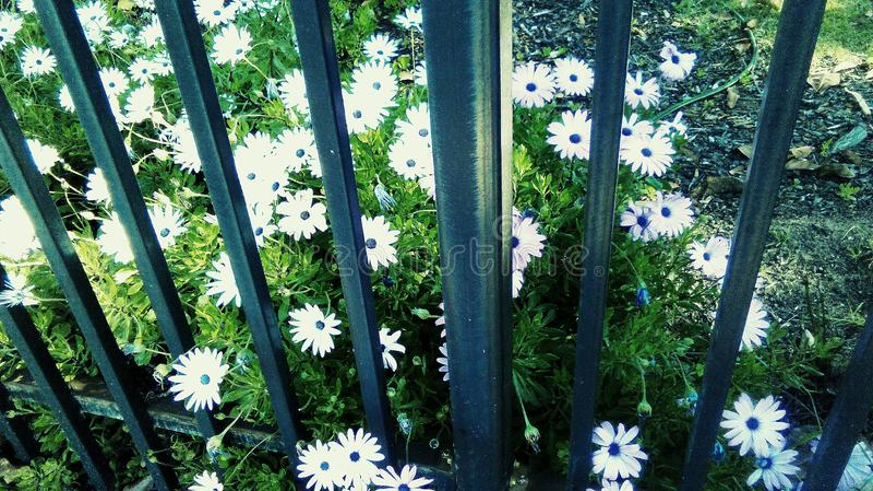 Λουλούδια φύσης φωτογραφίας στοκ εικόνες