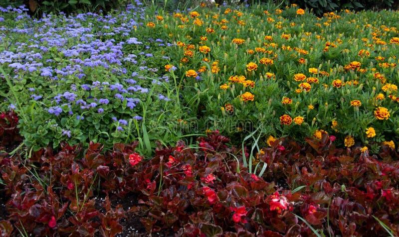 Λουλούδια χρώματος στοκ φωτογραφίες με δικαίωμα ελεύθερης χρήσης