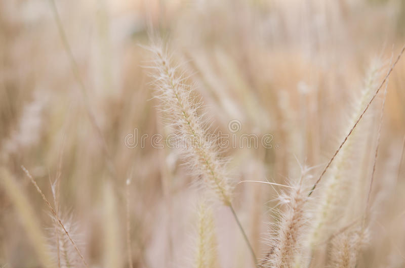 Λουλούδια χλόης στοκ φωτογραφία με δικαίωμα ελεύθερης χρήσης