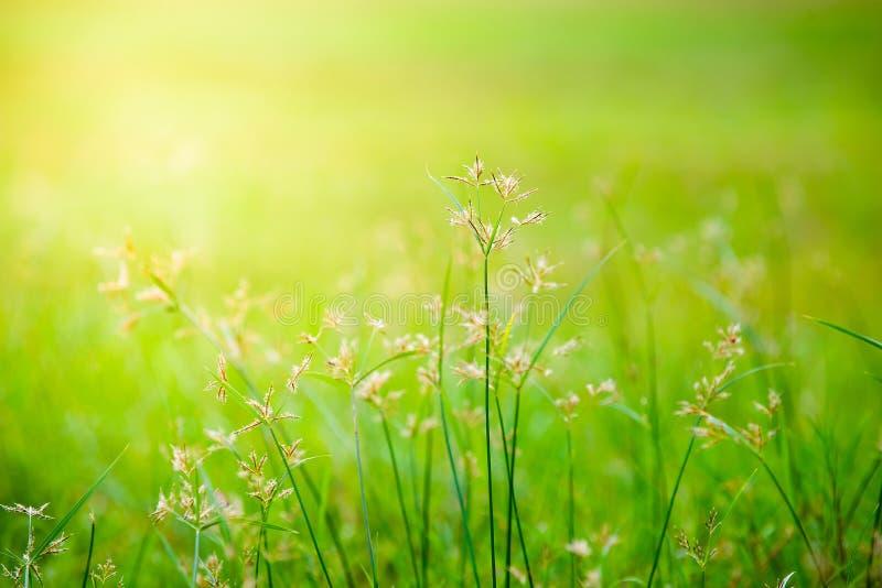 Λουλούδια χλόης στοκ φωτογραφία