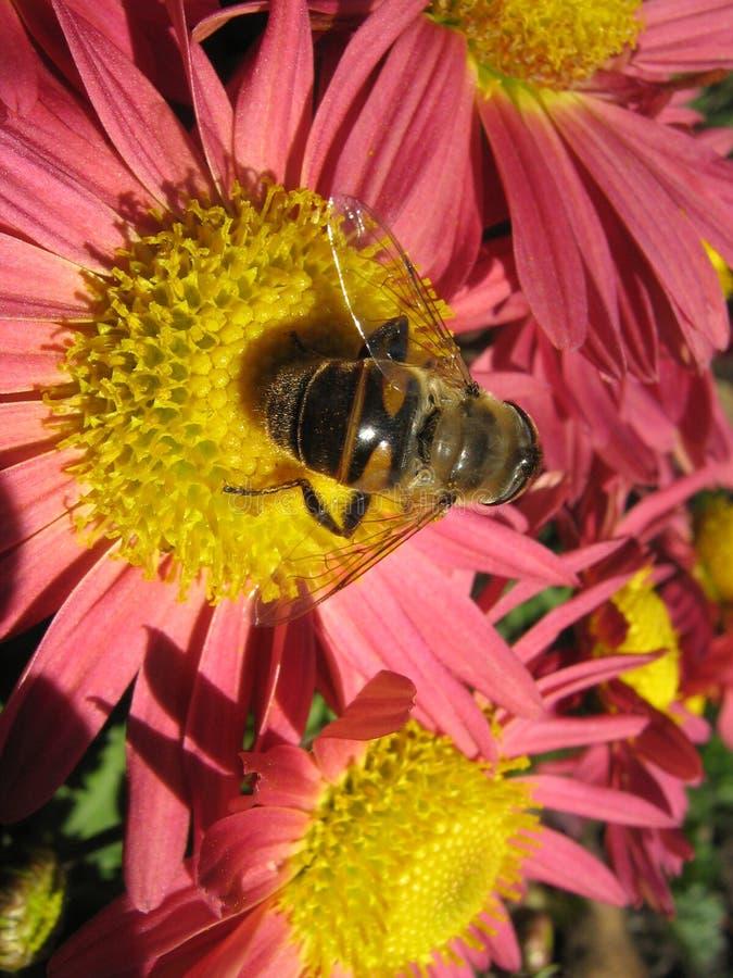 Λουλούδια στοκ φωτογραφίες με δικαίωμα ελεύθερης χρήσης