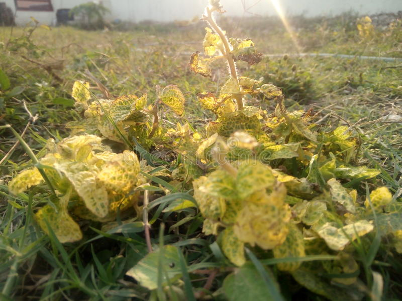 Λουλούδια στοκ φωτογραφία