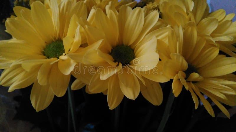 Λουλούδια στοκ φωτογραφίες