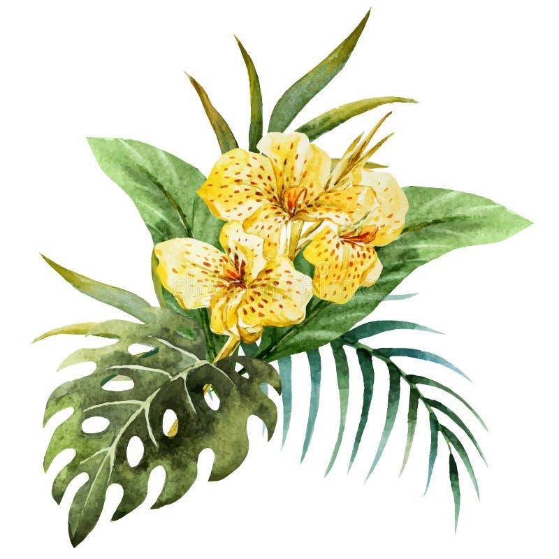 Λουλούδια Canna απεικόνιση αποθεμάτων