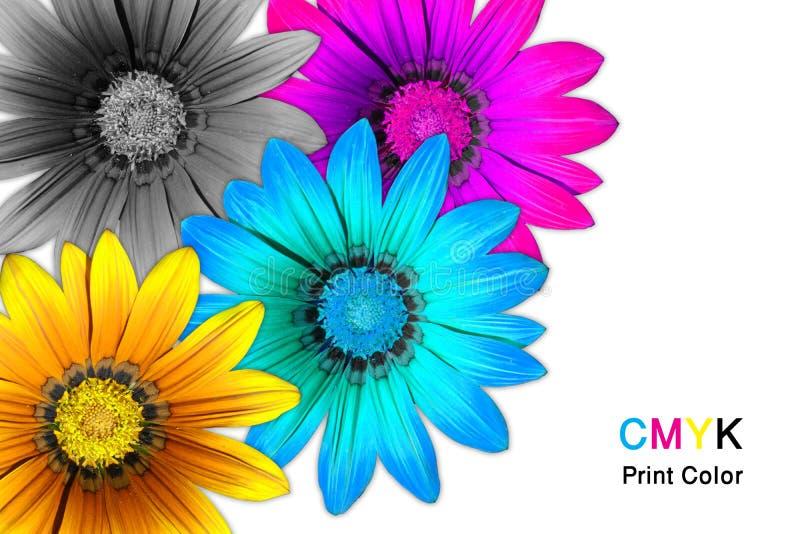 Λουλούδια CMYK Gazania στοκ εικόνα