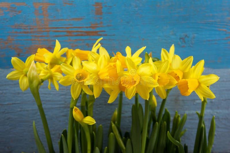 Λουλούδια Daffodil στοκ φωτογραφίες