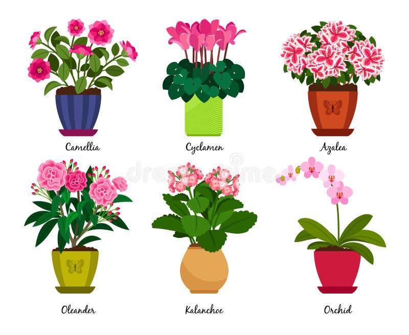 Λουλούδια Houseplant στα δοχεία ελεύθερη απεικόνιση δικαιώματος