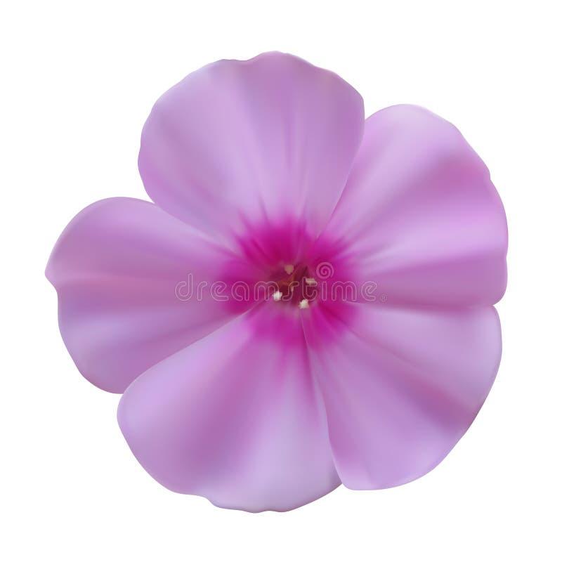 Λουλούδια Phlox απεικόνιση αποθεμάτων