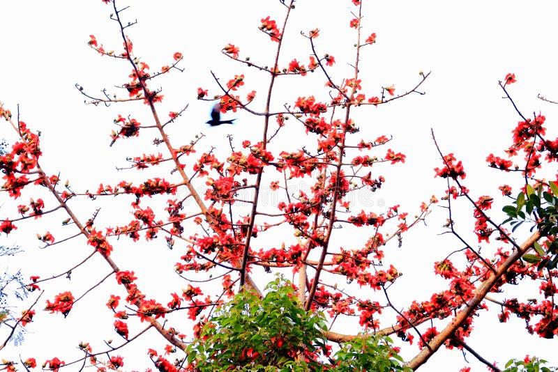 Λουλούδια Simul στοκ φωτογραφίες με δικαίωμα ελεύθερης χρήσης