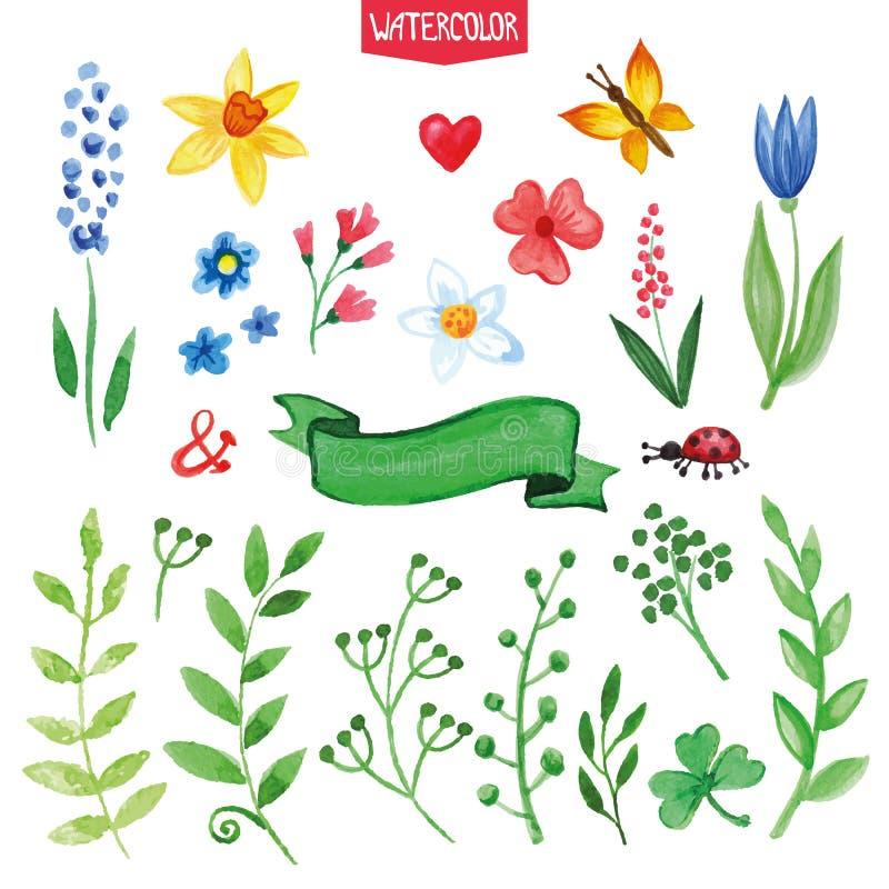Λουλούδια Watercolor, πράσινοι κλάδοι καθορισμένοι Καλοκαίρι ελεύθερη απεικόνιση δικαιώματος