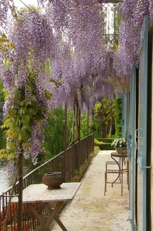 Λουλούδια Wisteria πέρα από το μπαλκόνι στοκ εικόνες