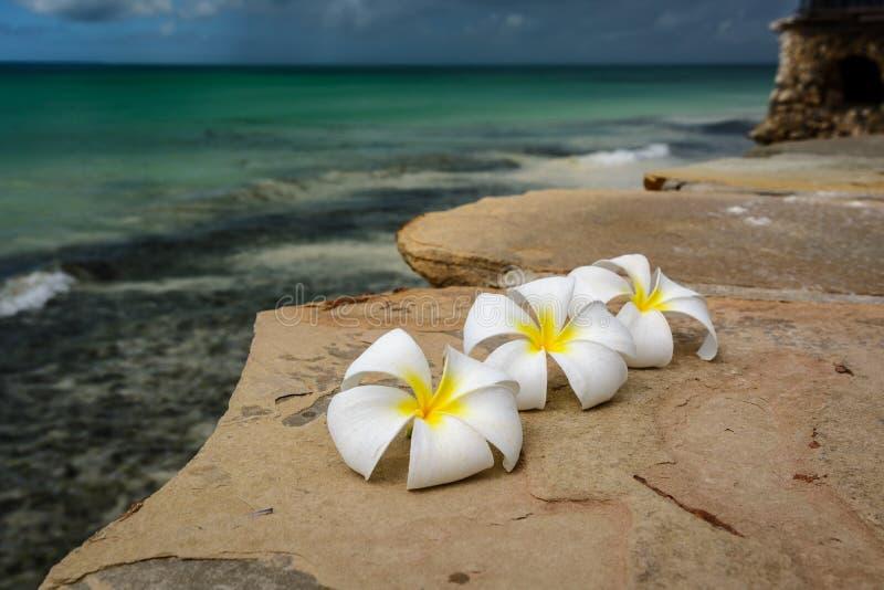 Λουλούδια Zanzibar στοκ φωτογραφίες με δικαίωμα ελεύθερης χρήσης