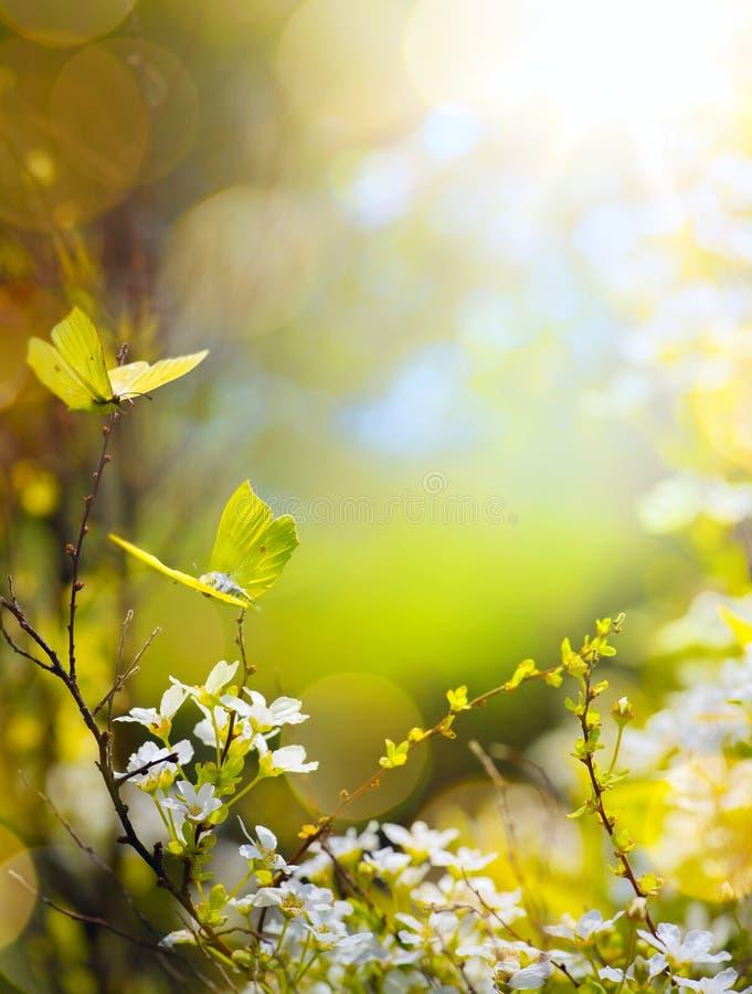 Λουλούδι άνοιξη και πεταλούδα μυγών  αφηρημένο ηλιόλουστο όμορφο Πάσχα στοκ φωτογραφία με δικαίωμα ελεύθερης χρήσης
