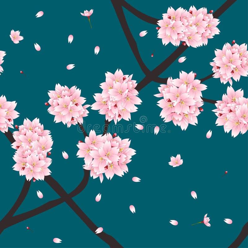 Λουλούδι ανθών κερασιών Sakura στο πράσινο υπόβαθρο κιρκιριών λουλακιού ελεύθερη απεικόνιση δικαιώματος
