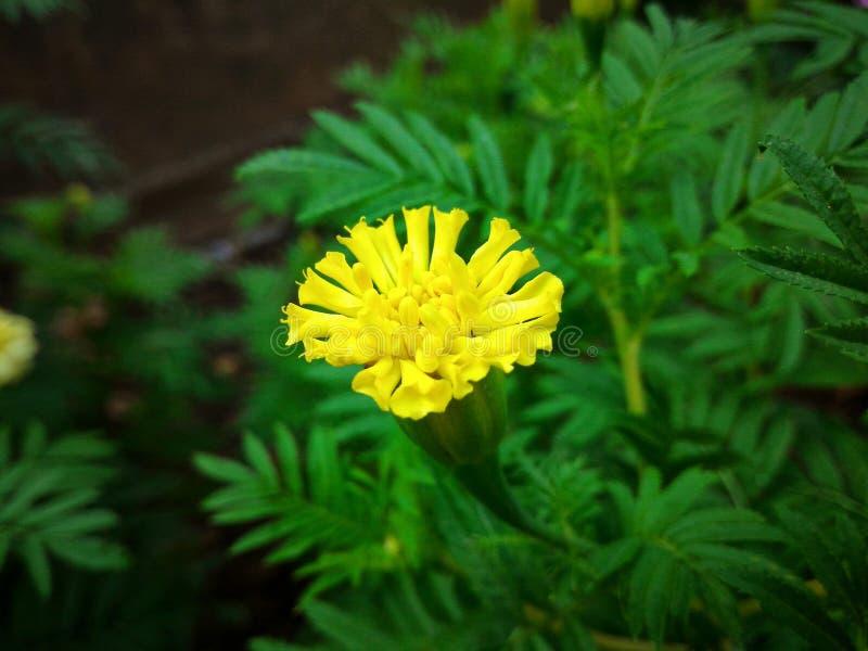 Λουλούδι ανθών στοκ εικόνα με δικαίωμα ελεύθερης χρήσης