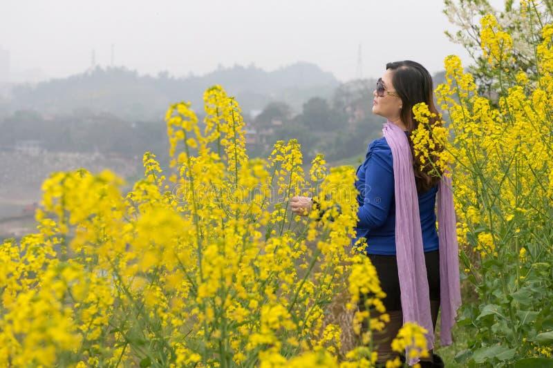 Λουλούδι βιασμών γυναικών και ελαιοσπόρων στοκ φωτογραφίες