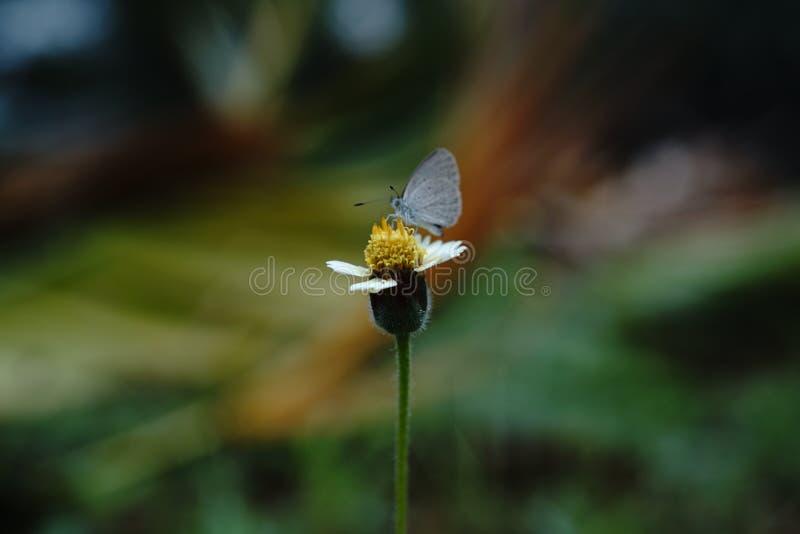 Λουλούδι εντόμων στοκ φωτογραφία με δικαίωμα ελεύθερης χρήσης