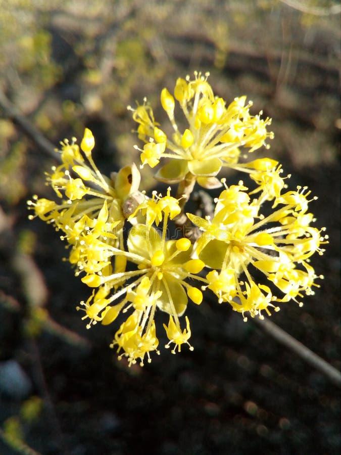 Λουλούδι, κήπος στοκ εικόνες