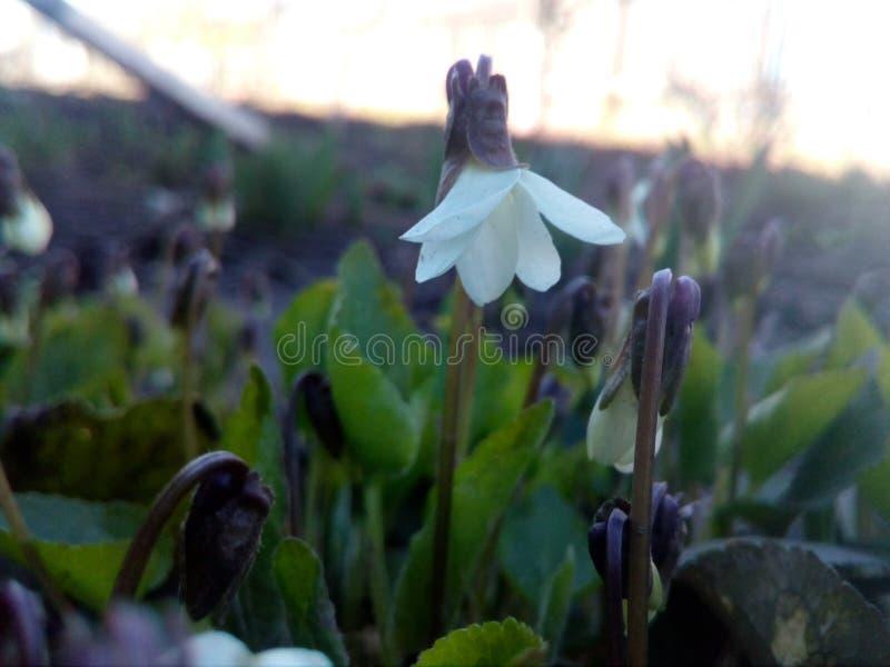 Λουλούδι, κήπος στοκ φωτογραφίες με δικαίωμα ελεύθερης χρήσης