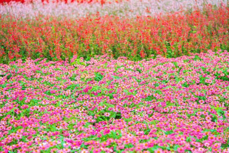 Λουλούδι κήπων στοκ εικόνα με δικαίωμα ελεύθερης χρήσης