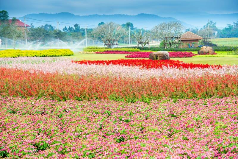 Λουλούδι κήπων στοκ εικόνα
