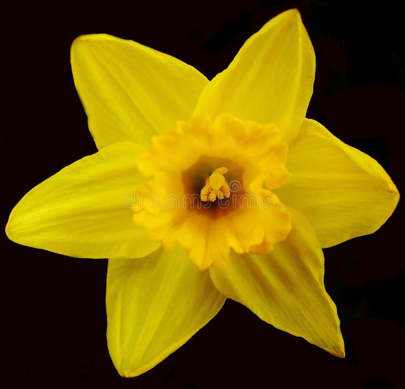 Λουλούδι κήπων στοκ φωτογραφίες