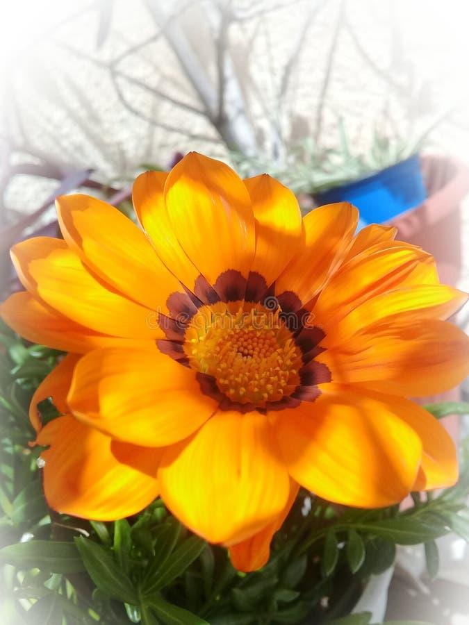 Λουλούδι και άσπρο υπόβαθρο Άνοιξη στοκ φωτογραφίες