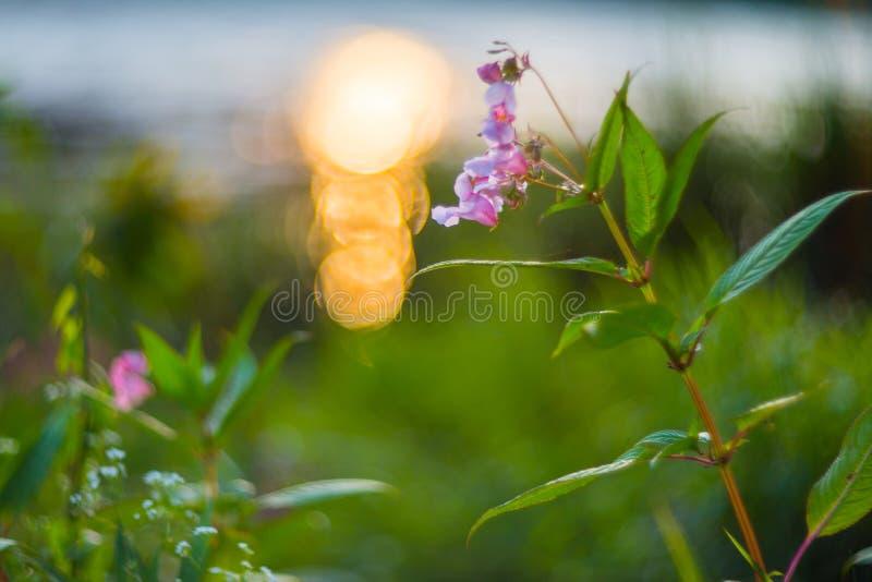 Λουλούδι και bokeh στοκ εικόνες