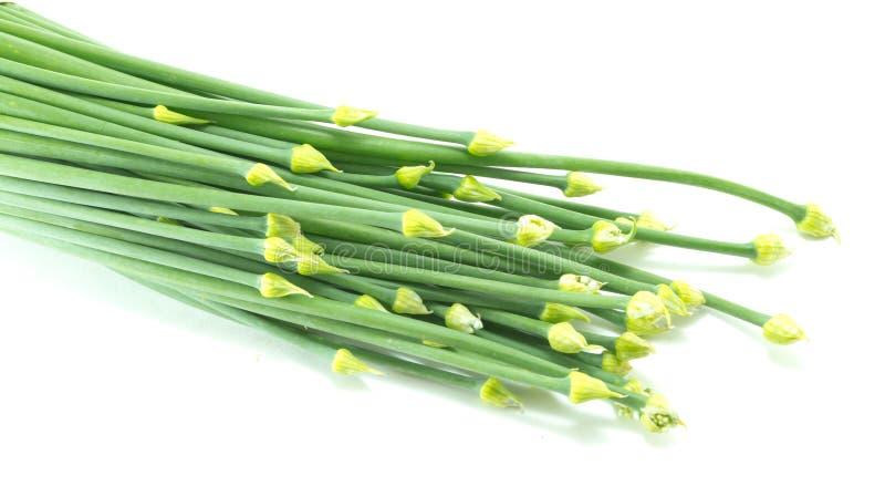 Λουλούδι κρεμμυδιών στο άσπρο υπόβαθρο στοκ εικόνες