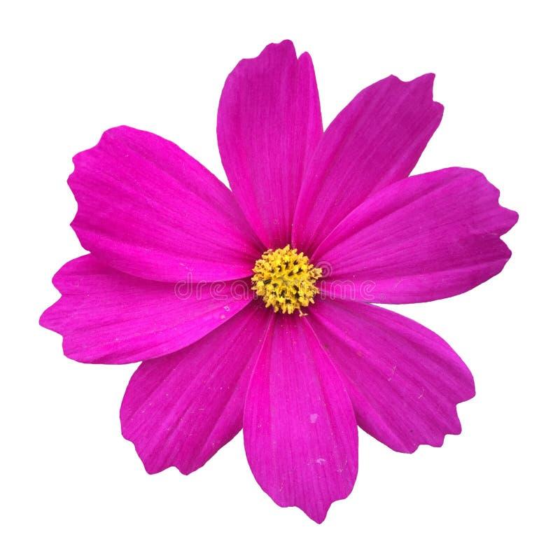 Λουλούδι κόσμου στοκ φωτογραφίες με δικαίωμα ελεύθερης χρήσης