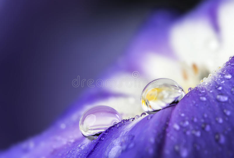 Λουλούδι με την πτώση δροσιάς στοκ φωτογραφίες