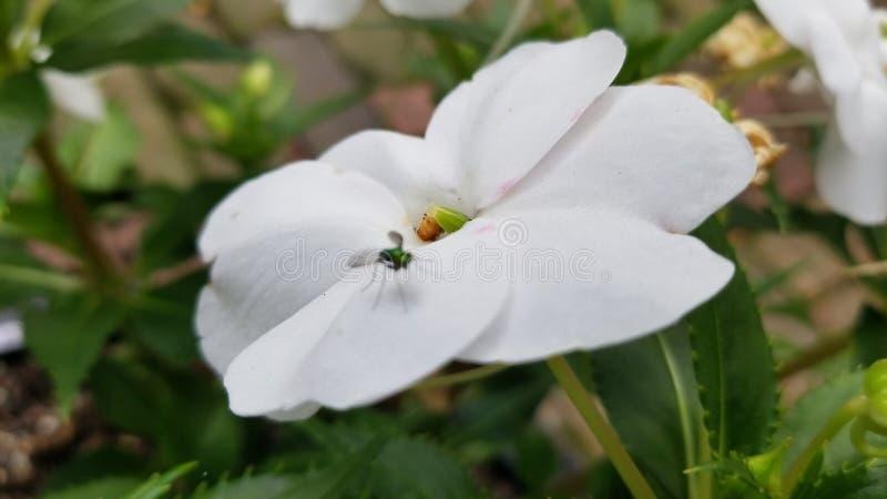 Λουλούδι με το μικρό ζωύφιο στοκ φωτογραφία με δικαίωμα ελεύθερης χρήσης