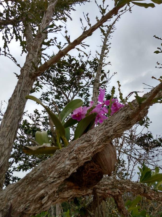 Λουλούδι ορχιδεών OrquÃdea στοκ εικόνες