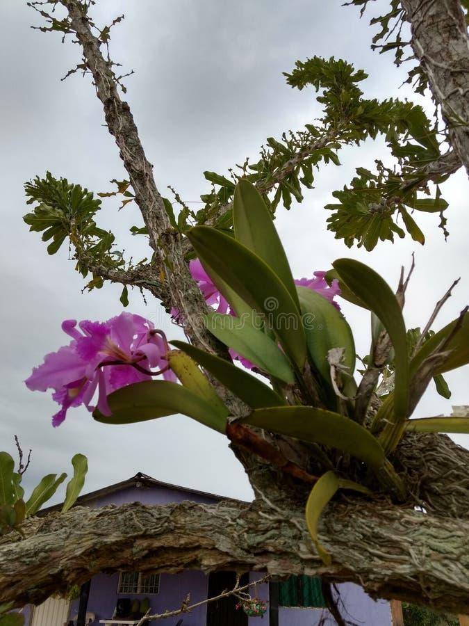 Λουλούδι ορχιδεών Orquidea στοκ εικόνες με δικαίωμα ελεύθερης χρήσης