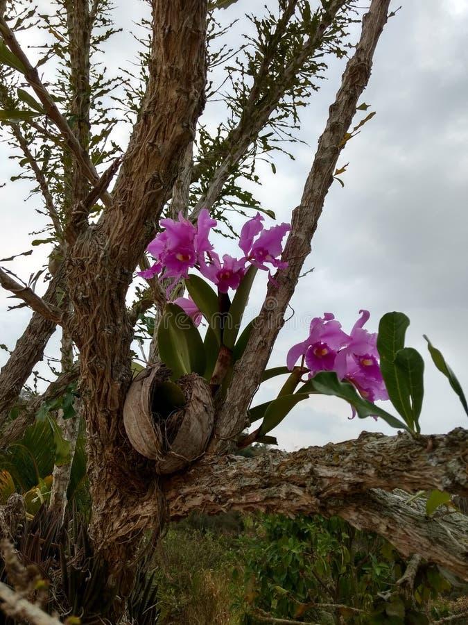 Λουλούδι ορχιδεών Orquidea στοκ εικόνα