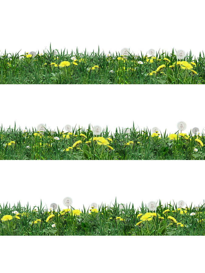 Λουλούδι πικραλίδων και πράσινη χλόη απεικόνιση αποθεμάτων
