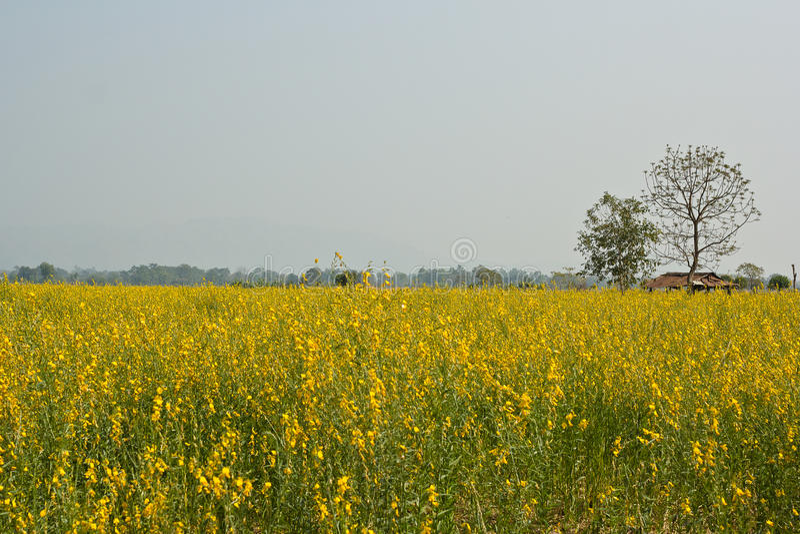 Λουλούδι που αρχειοθετείται στοκ εικόνα με δικαίωμα ελεύθερης χρήσης