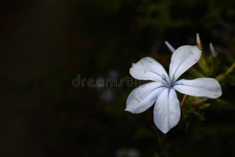 Λουλούδι που φωτίζεται στο σκοτάδι στοκ φωτογραφία