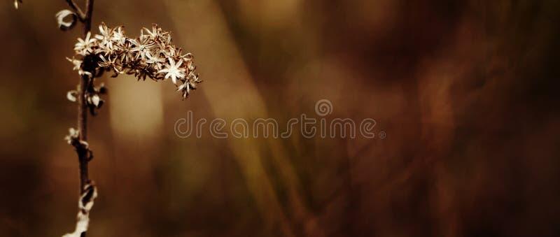 Λουλούδι πτώσης στοκ φωτογραφία με δικαίωμα ελεύθερης χρήσης