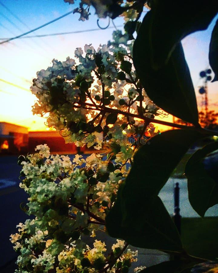 Λουλούδι πόλεων στοκ φωτογραφίες