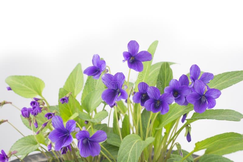 Λουλούδι σε χαμηλότερο - μισός στοκ φωτογραφίες με δικαίωμα ελεύθερης χρήσης